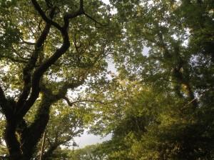 trees-highcliffe-dorset-ya